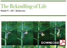 The Rekindling of Life